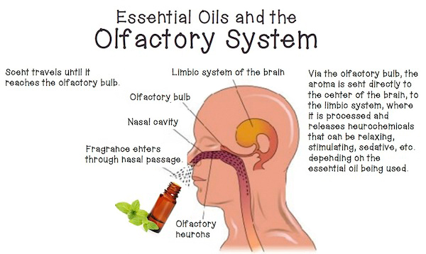 Essential-Oils-and-the-Brain-.jpg